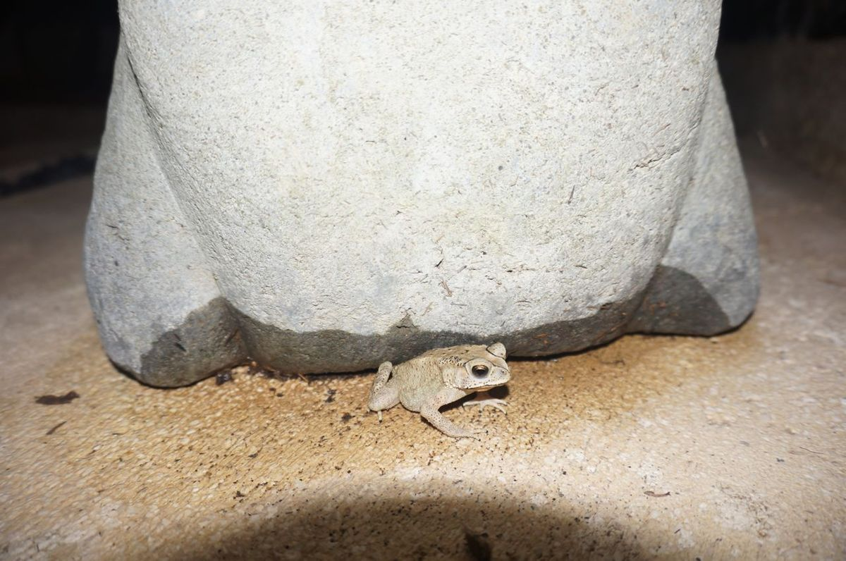 Un invité surprise dans la salle de bain ( Guérnoulle - en hommage aux origines de Gwen)