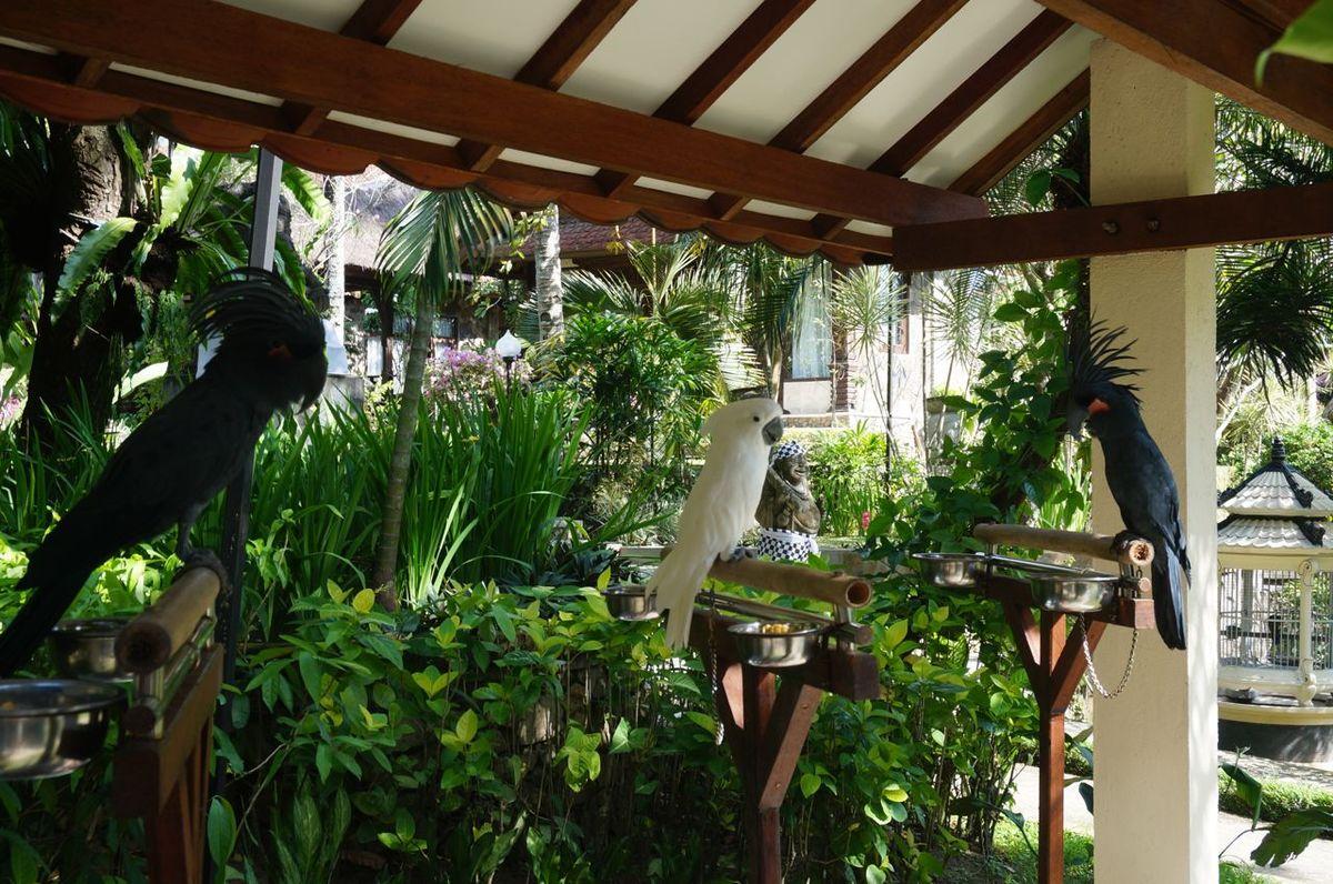 Les perroquets sur place