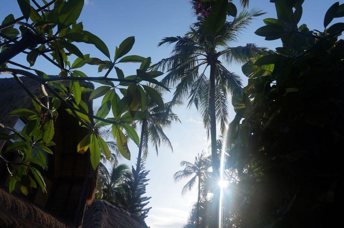 Des palmiers, du soleil