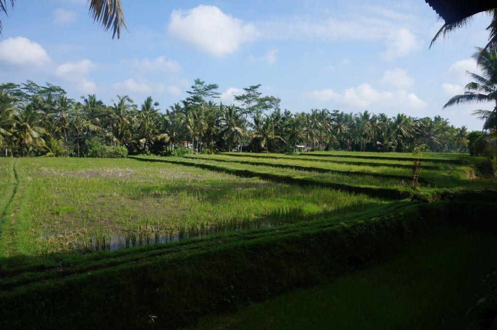 Notre nouveau panorama sur les rizières