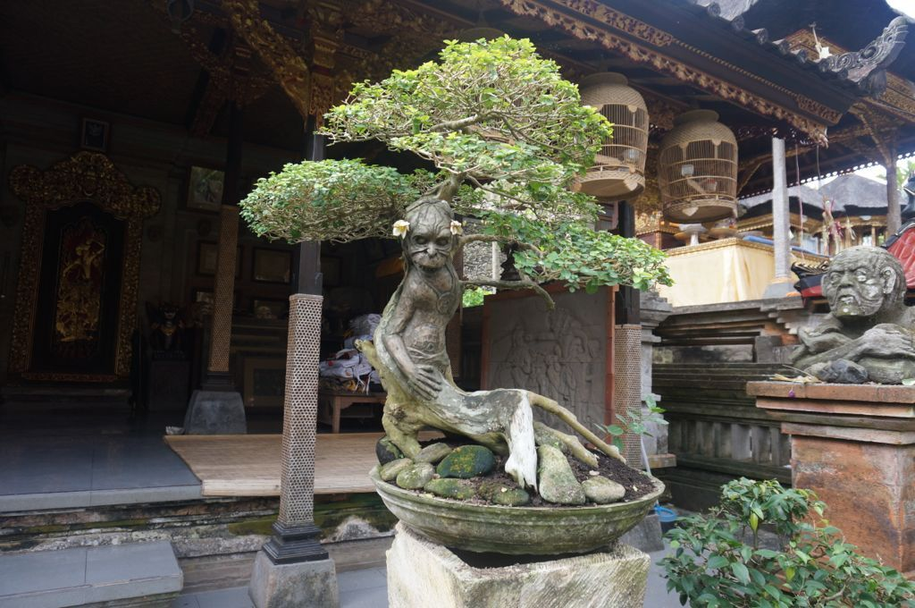 Une sculpture incroyable dans le tronc d'un Bonzaï