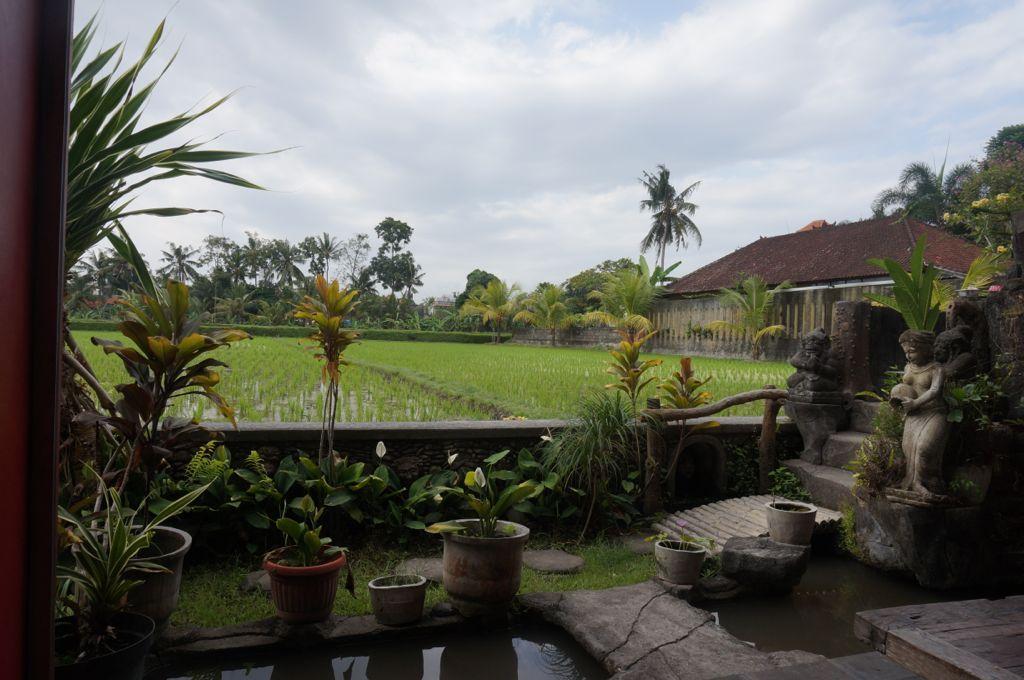 La vue depuis un petit restaurant d'Ubud.