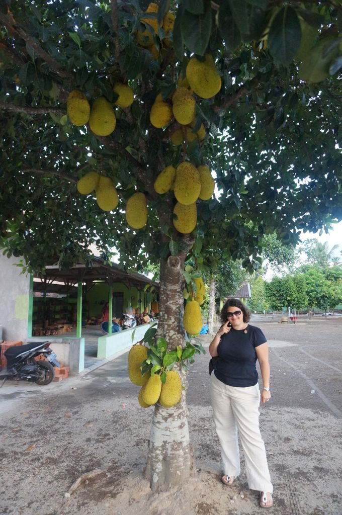 """Un arbre fruitier assez étranger, les fruits à l'intérieur son blanc et """"sweet"""" d'après les locaux"""