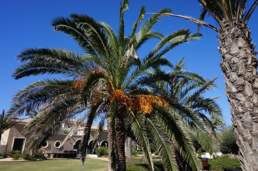 Cabo De Gata - Un Palmier immense, symbole de vacances